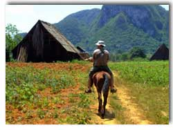 horseback in vinales valley